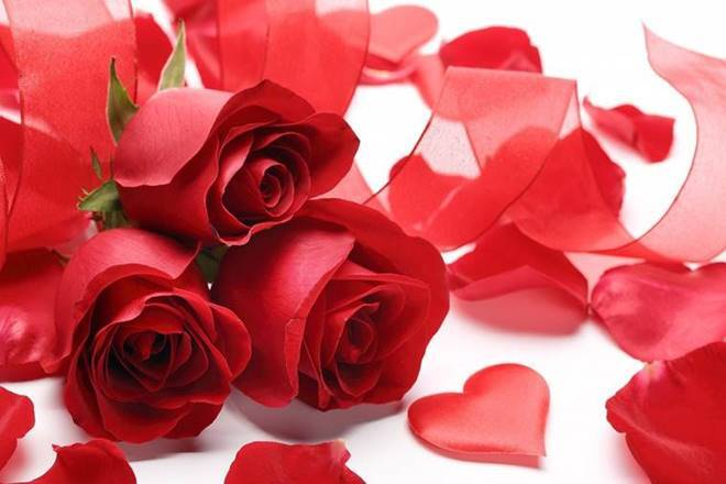 Rose day wishes, Happy Rose Day Images, whats app status for Rose day, best rose day images, rose day wishes 2021 images, rose day best greetings images, rose day 2021 images, rose day shayari images, latest images for rose day, rose day 2021, rose day, rose day wishes images for girlfriend, Rose day wishes images for Boyfriend,