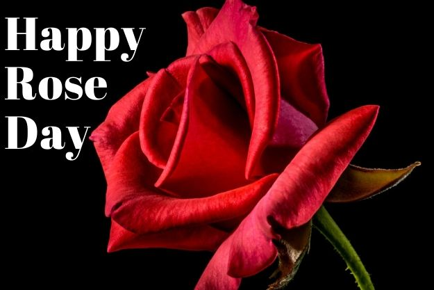 Rose day wishes, Happy Rose Day Images, whats app status for Rose day, best rose day images, rose day wishes 2021 images, rose day best greetings images, rose day 2021 images, rose day shayari images, latest images for rose day, rose day 2021, rose day, rose day wishes images for girlfriend, Rose day wishes images for Boyfriend, new rose day images, Happy Rose day quotes Lets download Happy Rose day images for your lovely girlfriend